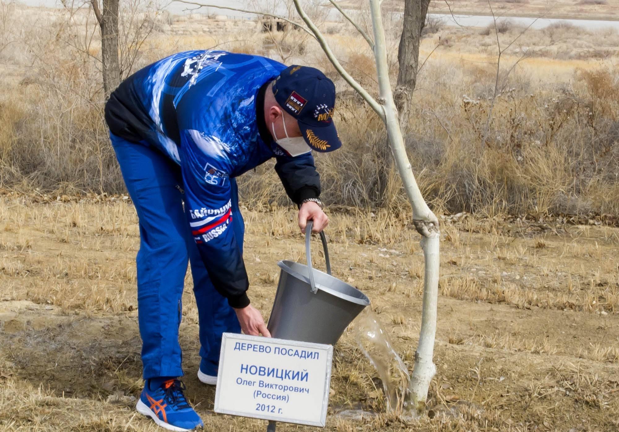 Oleg Novitsky arrose son arbre planté en 2012.